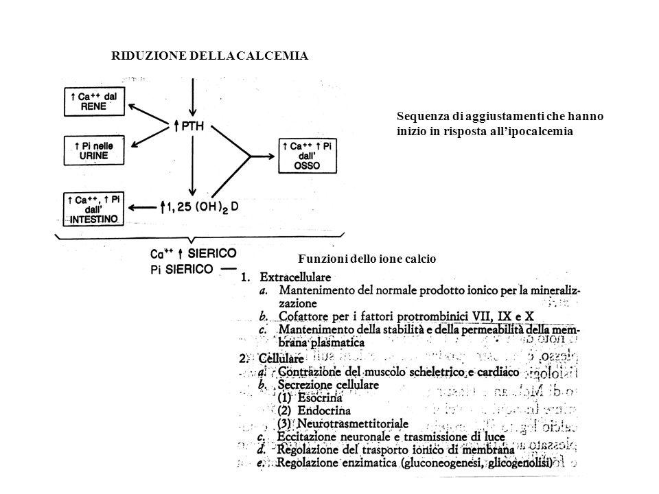 RIDUZIONE DELLA CALCEMIA Sequenza di aggiustamenti che hanno inizio in risposta allipocalcemia Funzioni dello ione calcio