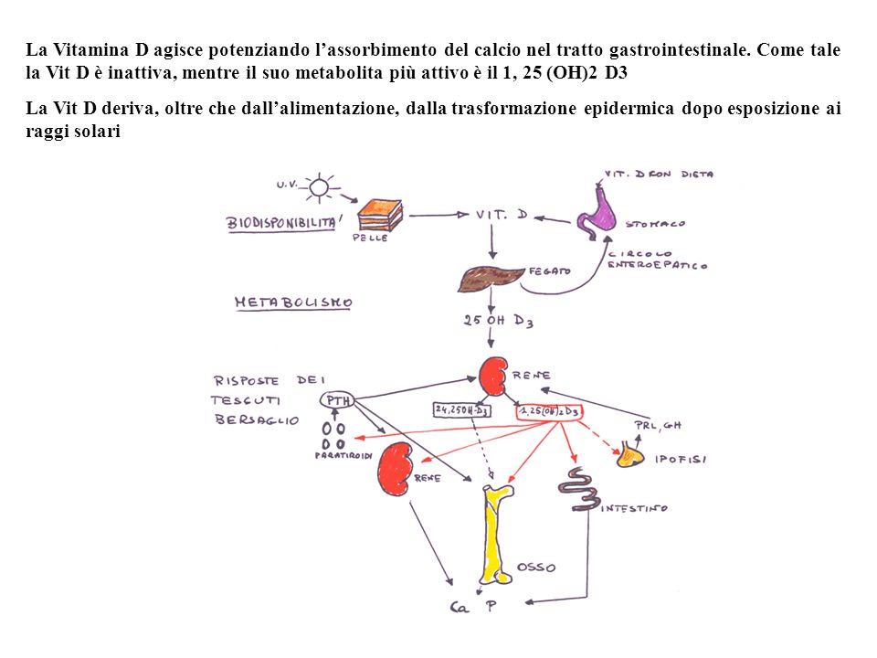ATTIVAZIONE DELLA VITAMINA D COLECALCIFEROLO (VIT D3) 25-OH-COLECALCIFEROLO) 1,25(OH)2COLECALCIFEROLO Proteina legante il CaATPasi Ca stmolataFosfatasi alcalina Assorbimento intestinale delCa Concentrazione di Ca ione ematico PTH(+) ( ) Durata di mesi Durata 2-5 gg fegato rene Epitelio intestinale Valori rif.