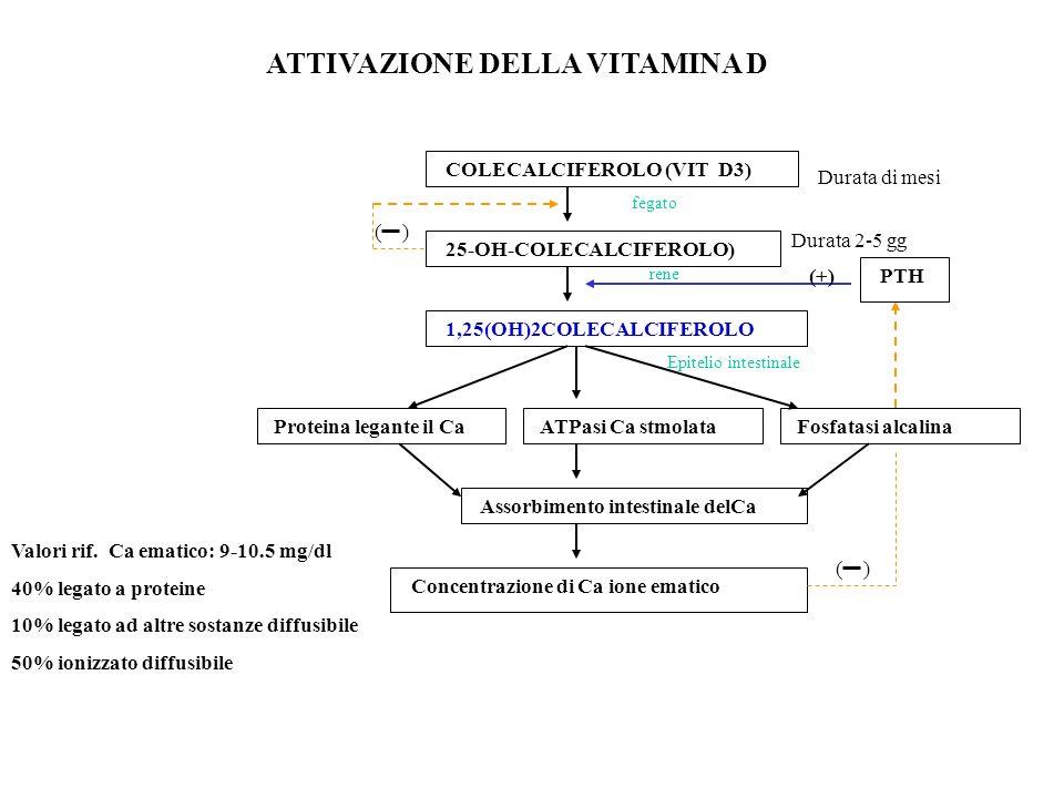 ATTIVAZIONE DELLA VITAMINA D COLECALCIFEROLO (VIT D3) 25-OH-COLECALCIFEROLO) 1,25(OH)2COLECALCIFEROLO Proteina legante il CaATPasi Ca stmolataFosfatas