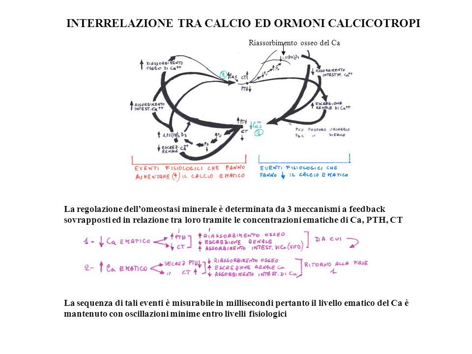 INTERRELAZIONE TRA CALCIO ED ORMONI CALCICOTROPI Riassorbimento osseo del Ca La regolazione dellomeostasi minerale è determinata da 3 meccanismi a fee