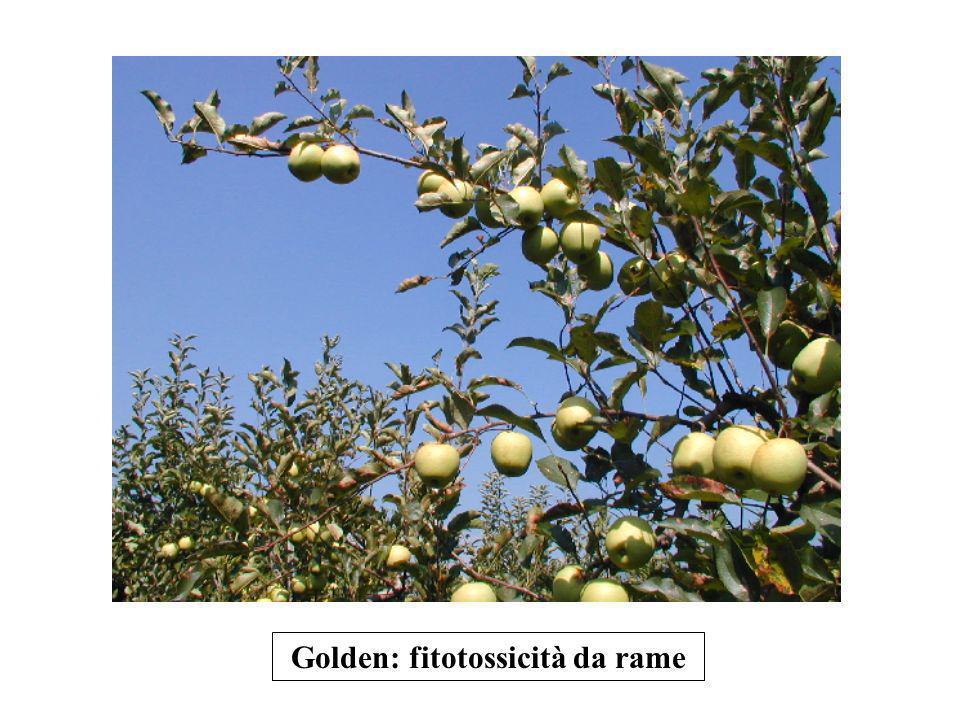 Golden: fitotossicità da rame