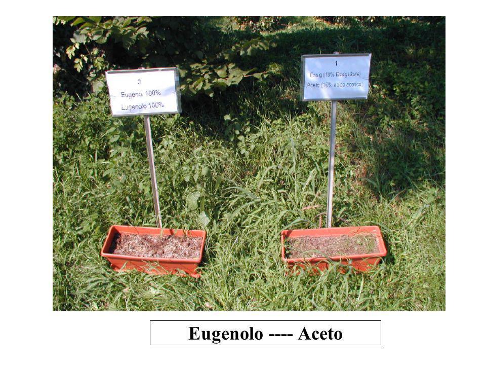 Eugenolo ---- Aceto