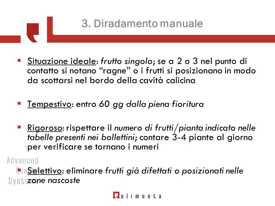 3. Diradamento manuale Situazione ideale: frutto singolo; se a 2 o 3 nel punto di contatto si notano ragne o i frutti si posizionano in modo da scotta