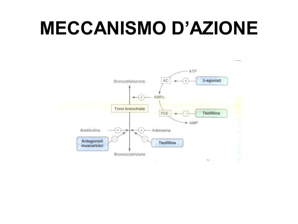 MECCANISMO DAZIONE