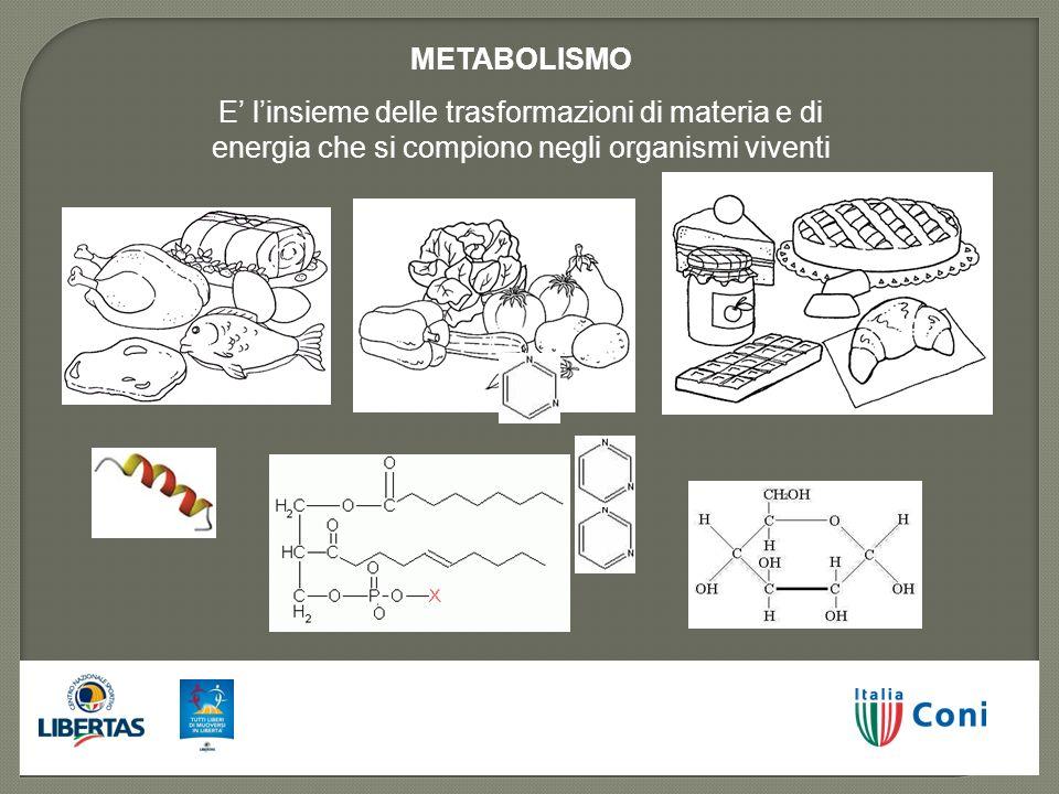 METABOLISMO E linsieme delle trasformazioni di materia e di energia che si compiono negli organismi viventi
