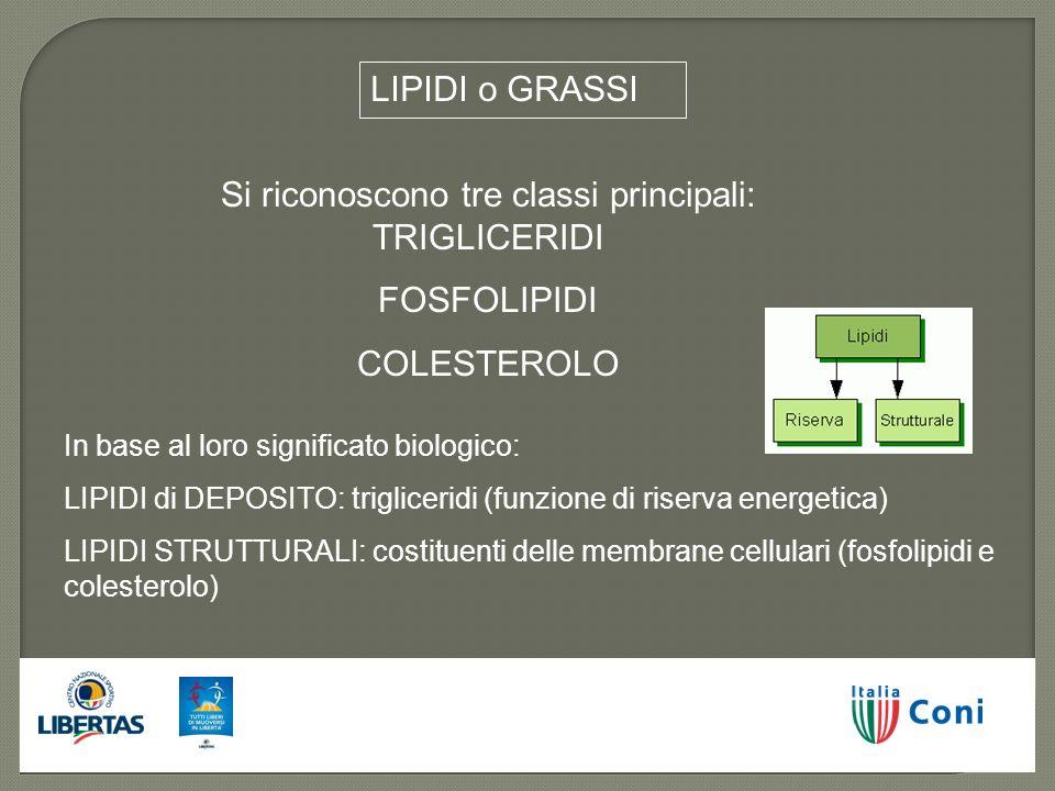 LIPIDI o GRASSI Si riconoscono tre classi principali: TRIGLICERIDI FOSFOLIPIDI COLESTEROLO In base al loro significato biologico: LIPIDI di DEPOSITO: