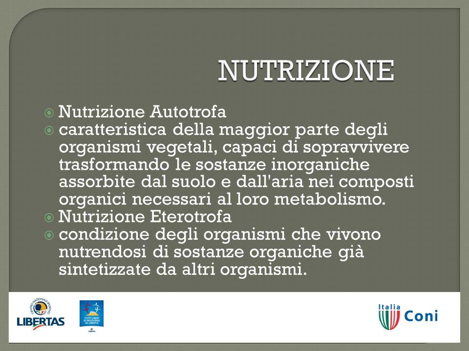 NUTRIZIONE Nutrizione Autotrofa Nutrizione Autotrofa caratteristica della maggior parte degli organismi vegetali, capaci di sopravvivere trasformando