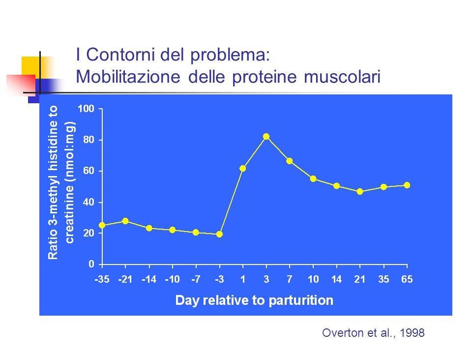 I Contorni del problema: Mobilitazione delle proteine muscolari Overton et al., 1998