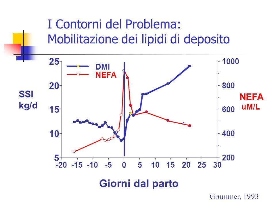 I Contorni del Problema: Mobilitazione dei lipidi di deposito 302520151050-5-10-15-20 5 10 15 20 25 200 400 600 800 1000 DMI NEFA Giorni dal parto NEF