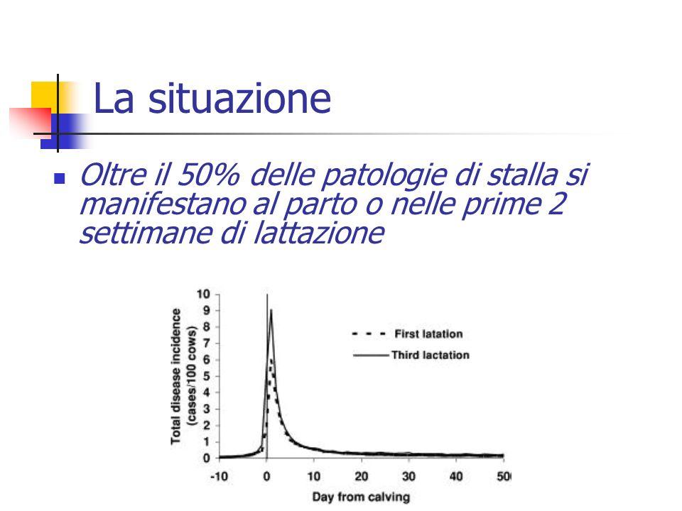 La situazione Oltre il 50% delle patologie di stalla si manifestano al parto o nelle prime 2 settimane di lattazione