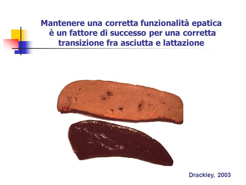 Drackley, 2003 Mantenere una corretta funzionalità epatica è un fattore di successo per una corretta transizione fra asciutta e lattazione