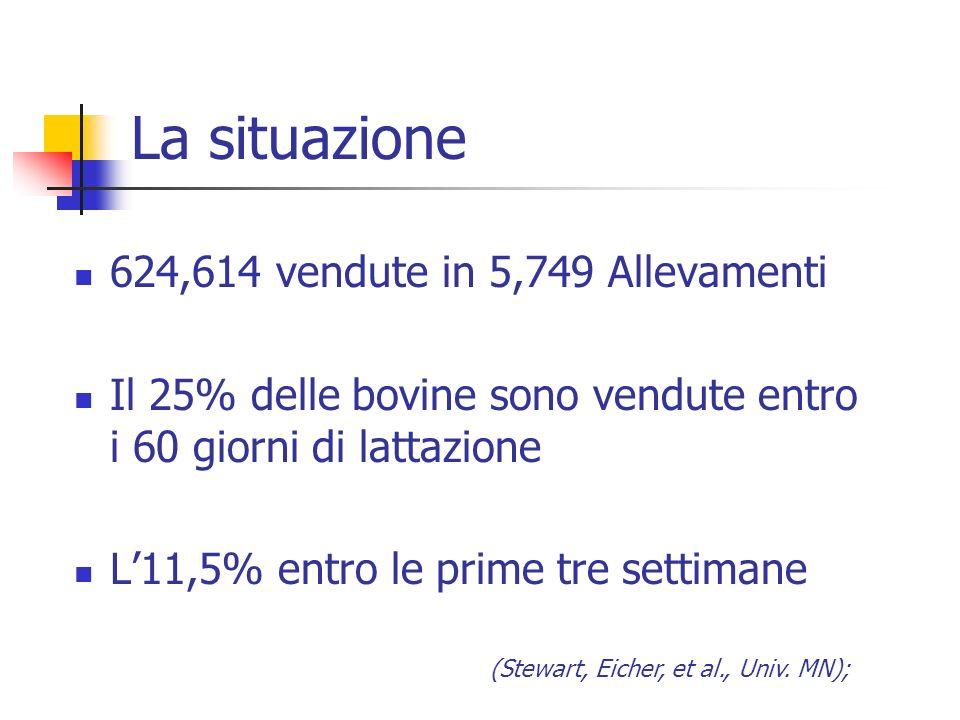 La situazione 624,614 vendute in 5,749 Allevamenti Il 25% delle bovine sono vendute entro i 60 giorni di lattazione L11,5% entro le prime tre settiman