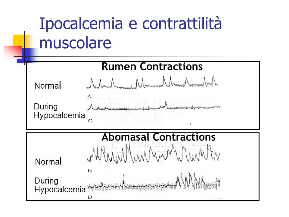 Ipocalcemia e contrattilità muscolare Rumen Contractions Abomasal Contractions Norma l During Hypocalcemia Norma l During Hypocalcemia