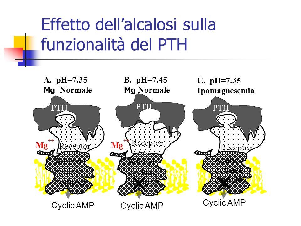 A. pH=7.35 Mg Normale Cyclic AMP PTH Receptor C. pH=7.35 Ipomagnesemia PTH Receptor B. pH=7.45 Mg Normale Receptor PTH Adenyl cyclase complex Cyclic A