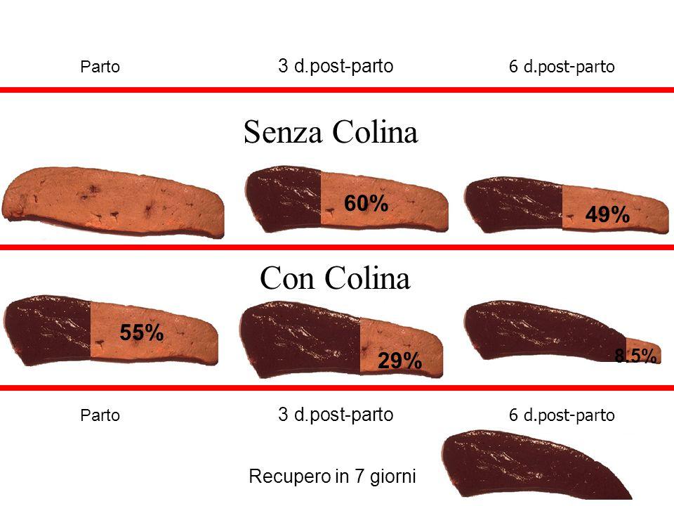 Con Colina Parto 3 d.post-parto 6 d.post-parto Recupero in 7 giorni 55% 29% 8.5% 60% 49% Parto 3 d.post-parto 6 d.post-parto Senza Colina