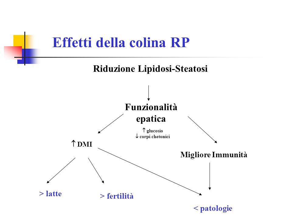 Riduzione Lipidosi-Steatosi Effetti della colina RP Funzionalità epatica Migliore Immunità > latte > fertilità < patologie DMI glucosio corpi chetonic