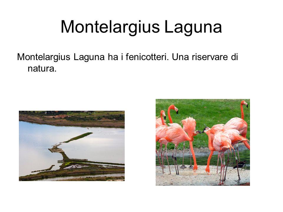 Montelargius Laguna Montelargius Laguna ha i fenicotteri. Una riservare di natura.