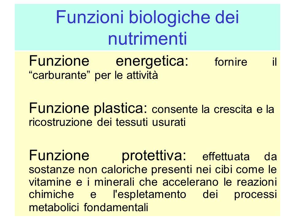 Funzioni biologiche dei nutrimenti Funzione energetica: fornire il carburante per le attività Funzione plastica: consente la crescita e la ricostruzio
