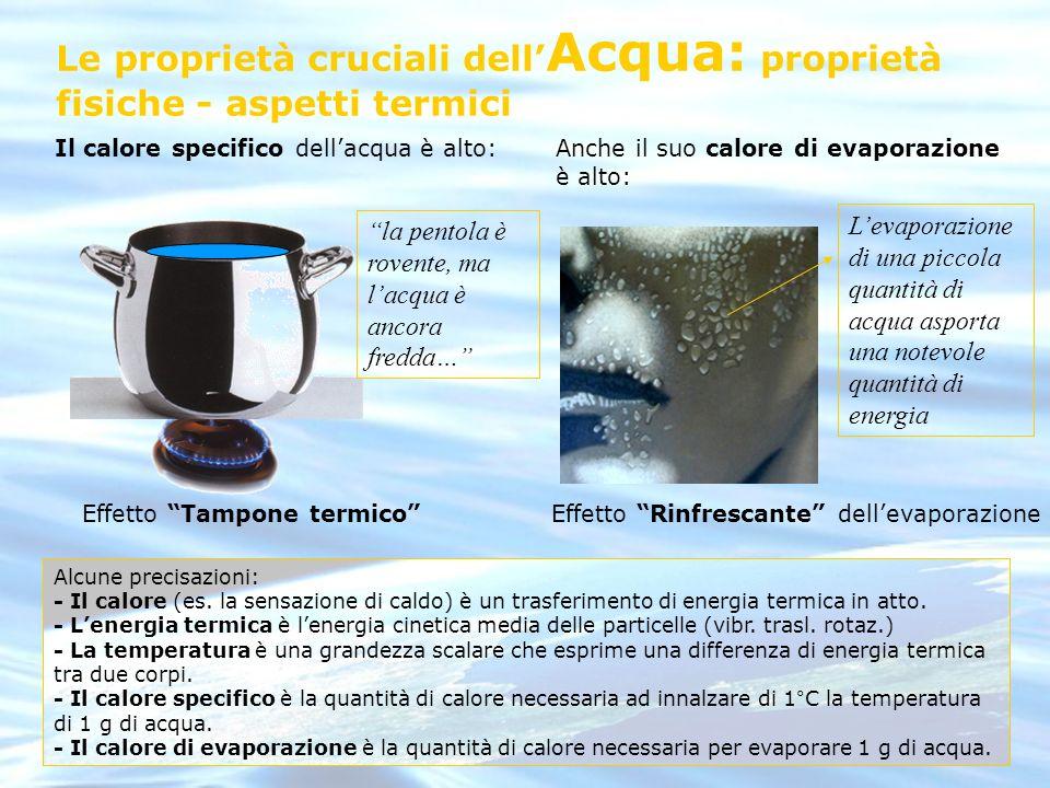 Le proprietà cruciali dell Acqua: proprietà fisiche - aspetti termici Il calore specifico dellacqua è alto: la pentola è rovente, ma lacqua è ancora f