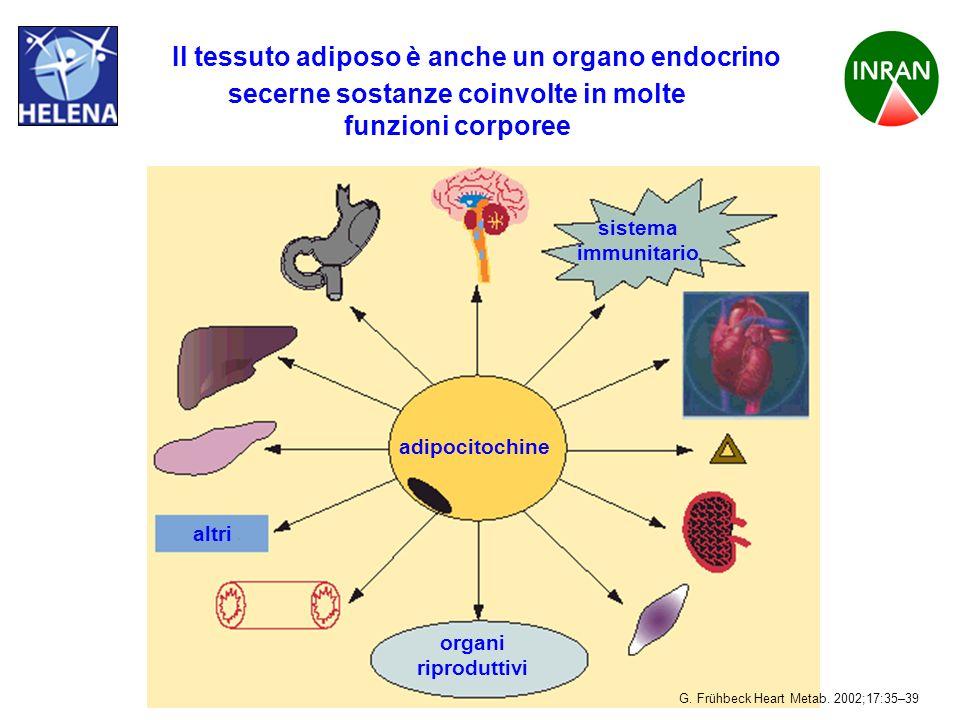 PROGETTO HELENA Il tessuto adiposo è anche un organo endocrino secerne sostanze coinvolte in molte funzioni corporee adipocitochine sistema immunitari
