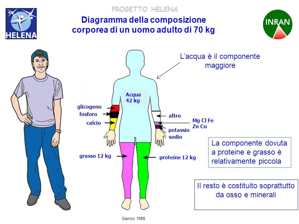 PROGETTO HELENA Diagramma della composizione corporea di un uomo adulto di 70 kg Acqua 42 kg glicogeno fosforo calcio altro potassio sodio Mg Cl Fe Zn