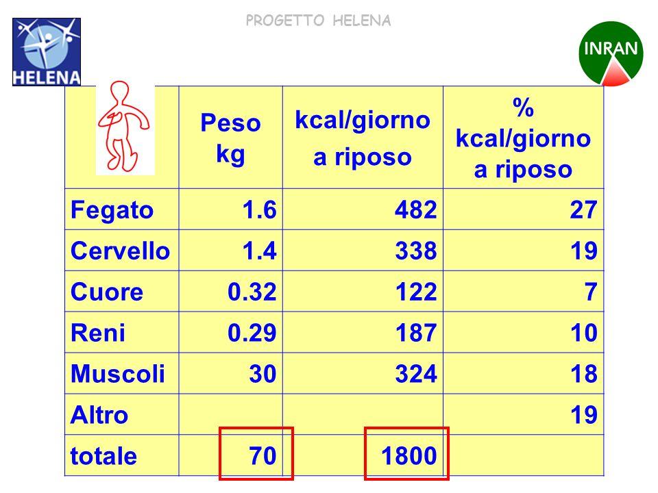 PROGETTO HELENA Peso kg kcal/giorno a riposo % kcal/giorno a riposo Fegato1.648227 Cervello1.433819 Cuore0.321227 Reni0.2918710 Muscoli3032418 Altro19