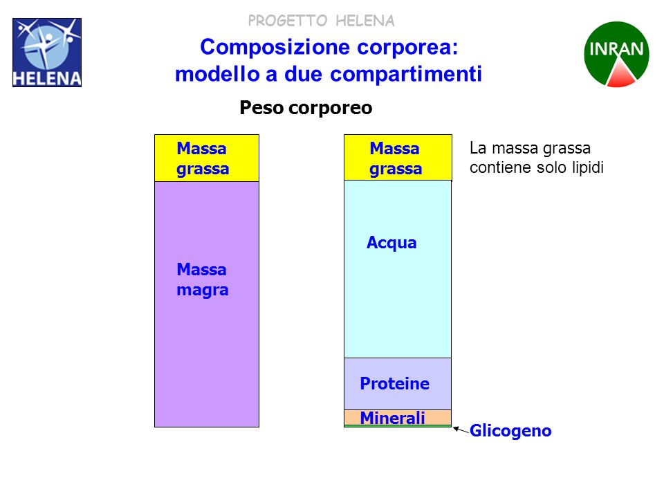 PROGETTO HELENA Composizione corporea: modello a due compartimenti La massa grassa contiene solo lipidi Massa grassa Massa magra Acqua proteine minera