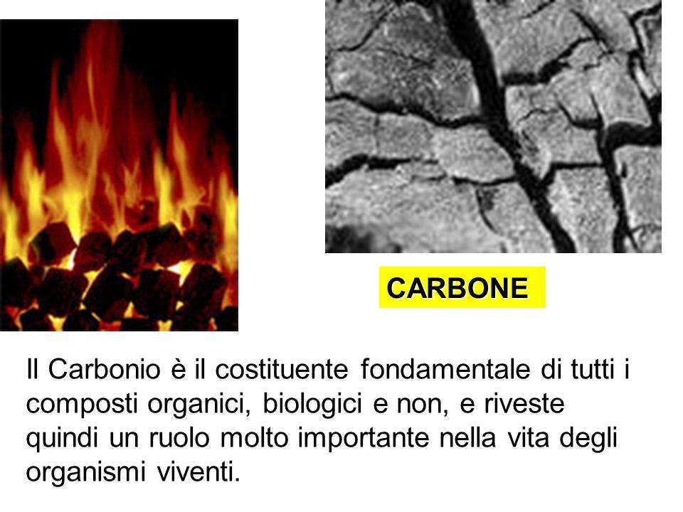 CARBONE Il Carbonio è il costituente fondamentale di tutti i composti organici, biologici e non, e riveste quindi un ruolo molto importante nella vita