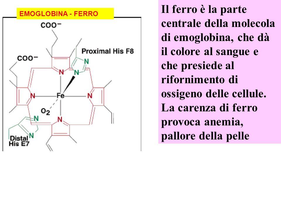EMOGLOBINA - FERRO Il ferro è la parte centrale della molecola di emoglobina, che dà il colore al sangue e che presiede al rifornimento di ossigeno delle cellule.