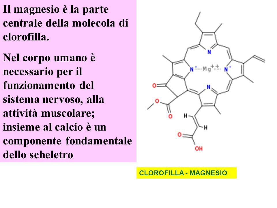 CLOROFILLA - MAGNESIO Il magnesio è la parte centrale della molecola di clorofilla. Nel corpo umano è necessario per il funzionamento del sistema nerv