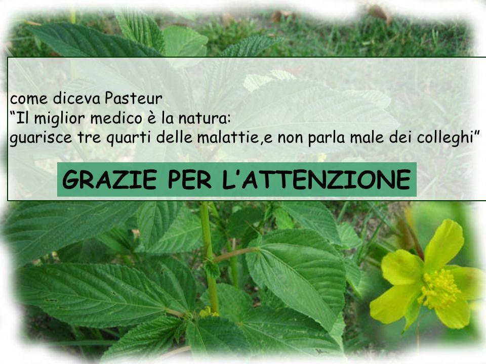 GRAZIE PER LATTENZIONE come diceva Pasteur Il miglior medico è la natura: guarisce tre quarti delle malattie,e non parla male dei colleghi