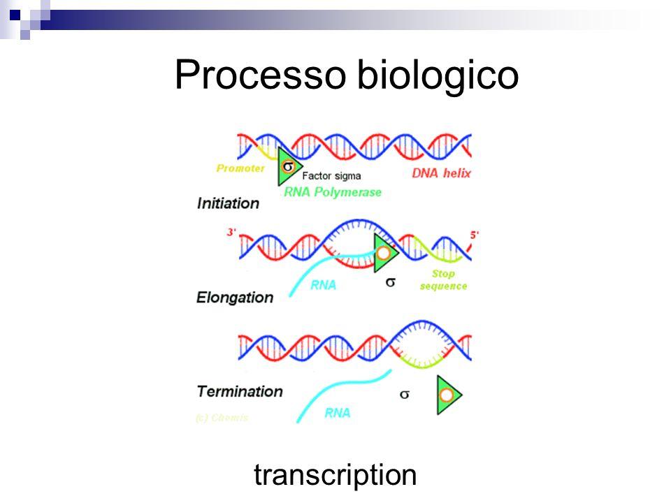 transcription Processo biologico