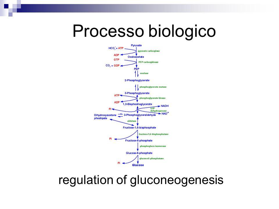 regulation of gluconeogenesis Processo biologico