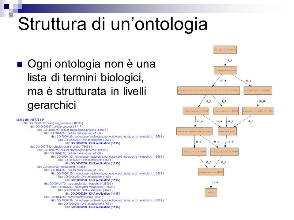 Struttura di unontologia Ogni ontologia non è una lista di termini biologici, ma è strutturata in livelli gerarchici