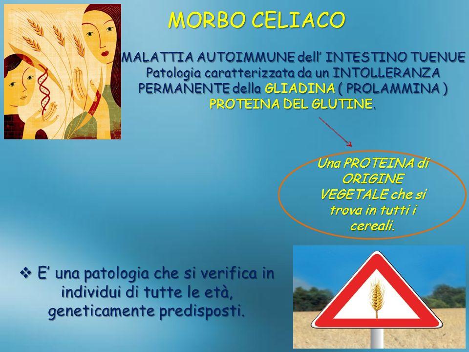 MORBO CELIACO MALATTIA AUTOIMMUNE dell INTESTINO TUENUE Patologia caratterizzata da un INTOLLERANZA PERMANENTE della GLIADINA ( PROLAMMINA ) PROTEINA