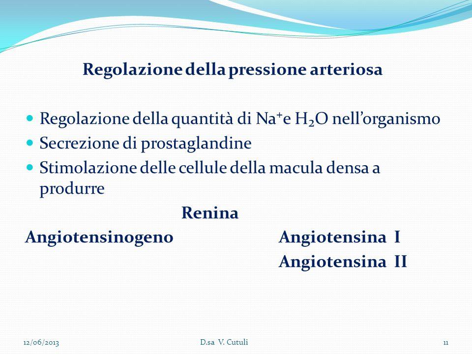 Regolazione della pressione arteriosa Regolazione della quantità di Nae HO nellorganismo Secrezione di prostaglandine Stimolazione delle cellule della