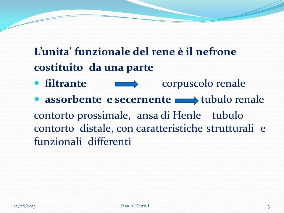 Lunita funzionale del rene è il nefrone costituito da una parte filtrante corpuscolo renale assorbente e secernente tubulo renale contorto prossimale,