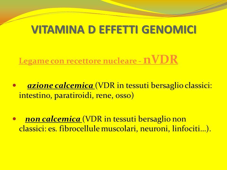 VITAMINA D EFFETTI GENOMICI Legame con recettore nucleare - nVDR azione calcemica (VDR in tessuti bersaglio classici: intestino, paratiroidi, rene, os