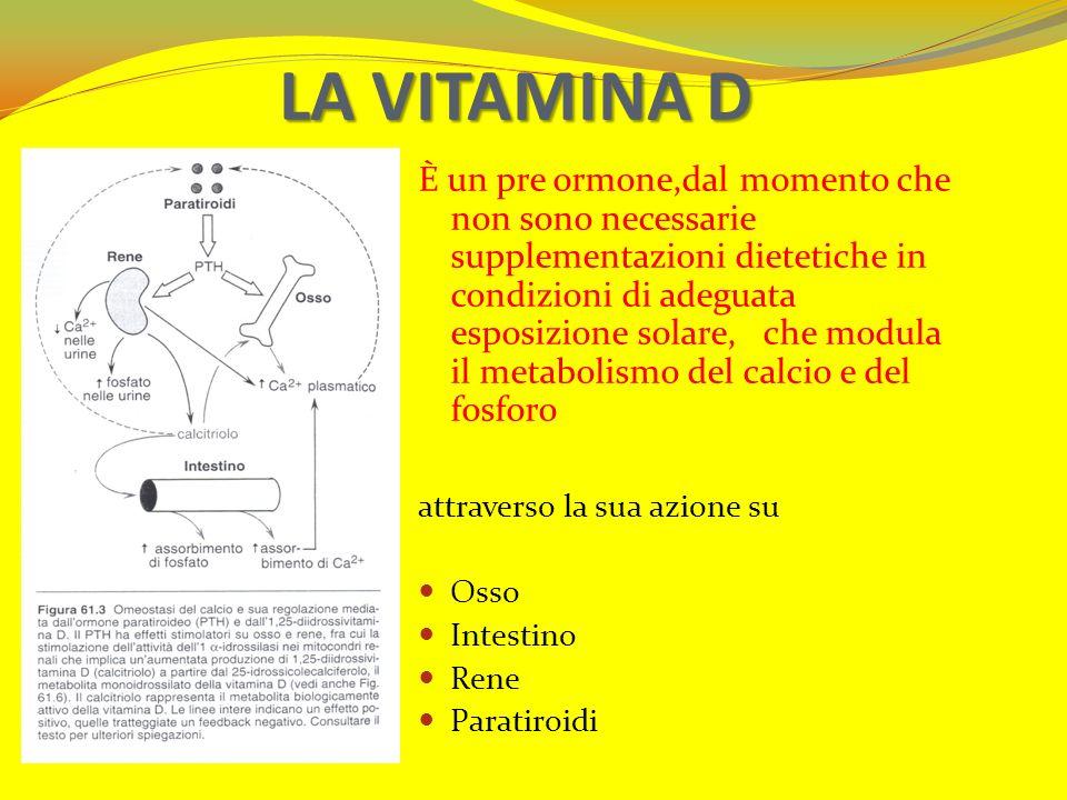 LA VITAMINA D È un pre ormone,dal momento che non sono necessarie supplementazioni dietetiche in condizioni di adeguata esposizione solare, che modula
