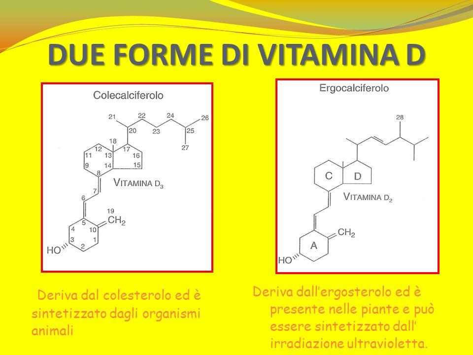 DUE FORME DI VITAMINA D Deriva dal colesterolo ed è sintetizzato dagli organismi animali Deriva dallergosterolo ed è presente nelle piante e può esser