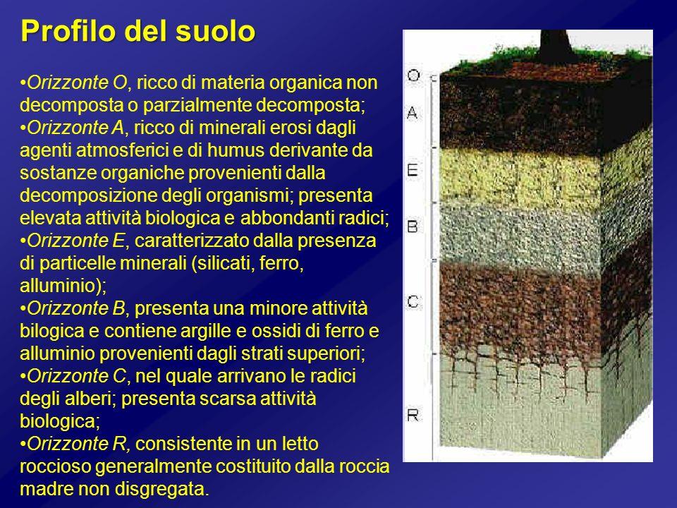 Profilo del suolo Orizzonte O, ricco di materia organica non decomposta o parzialmente decomposta; Orizzonte A, ricco di minerali erosi dagli agenti a