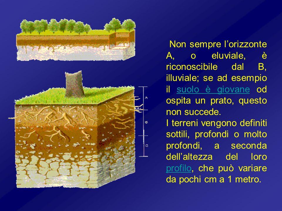 Non sempre lorizzonte A, o eluviale, è riconoscibile dal B, illuviale; se ad esempio il suolo è giovane od ospita un prato, questo non succede.suolo è