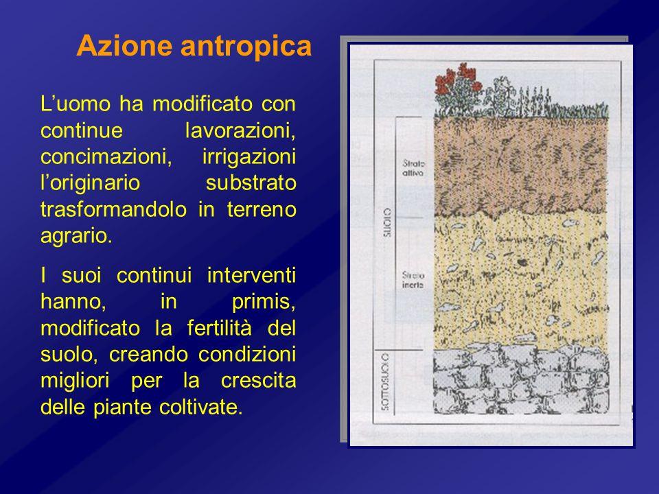 Azione antropica Luomo ha modificato con continue lavorazioni, concimazioni, irrigazioni loriginario substrato trasformandolo in terreno agrario. I su