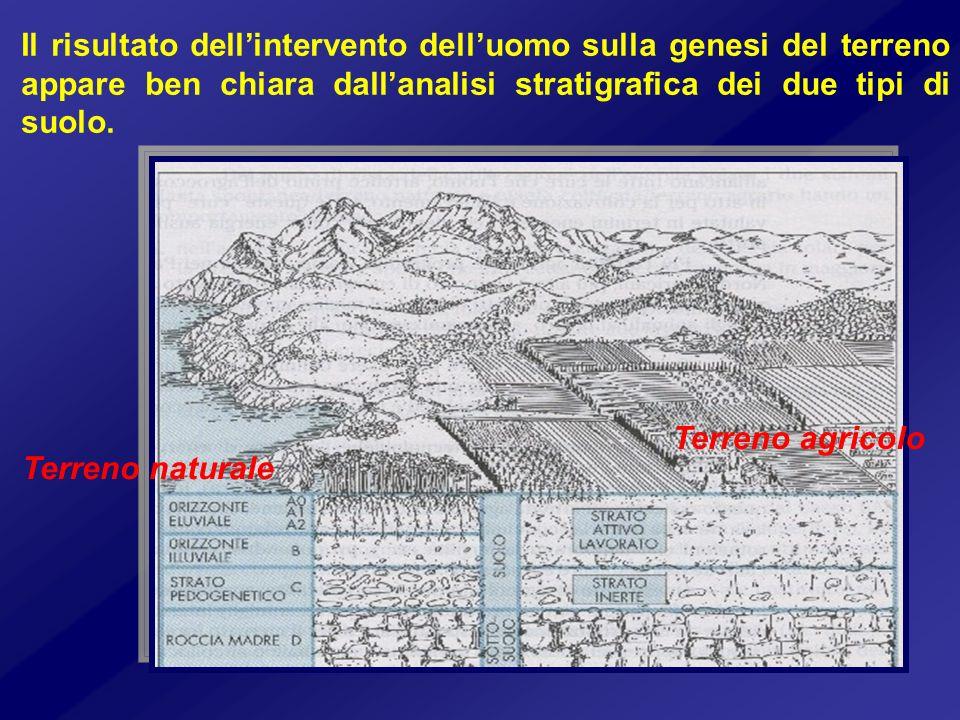 Il risultato dellintervento delluomo sulla genesi del terreno appare ben chiara dallanalisi stratigrafica dei due tipi di suolo. Terreno agricolo Terr