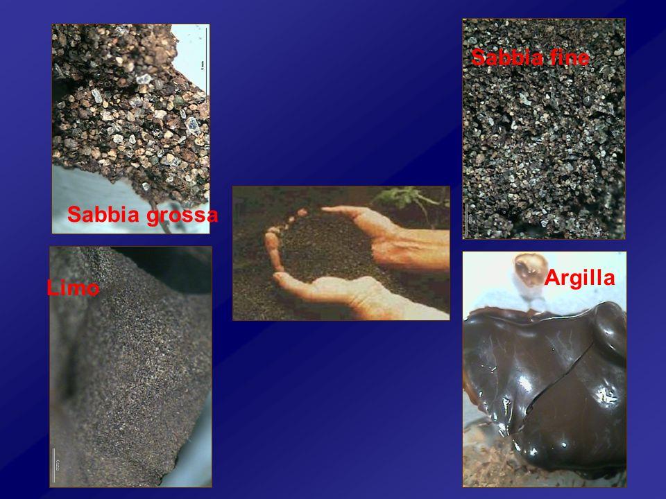 Sabbia grossa Sabbia fine Limo Argilla