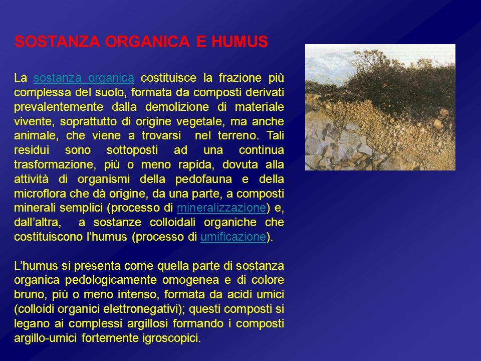 SOSTANZA ORGANICA E HUMUS La sostanza organica costituisce la frazione più complessa del suolo, formata da composti derivati prevalentemente dalla dem