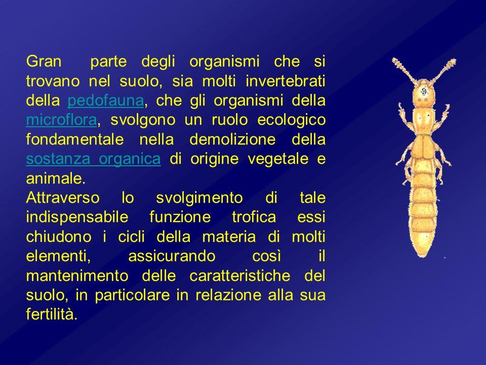 Gran parte degli organismi che si trovano nel suolo, sia molti invertebrati della pedofauna, che gli organismi della microflora, svolgono un ruolo eco