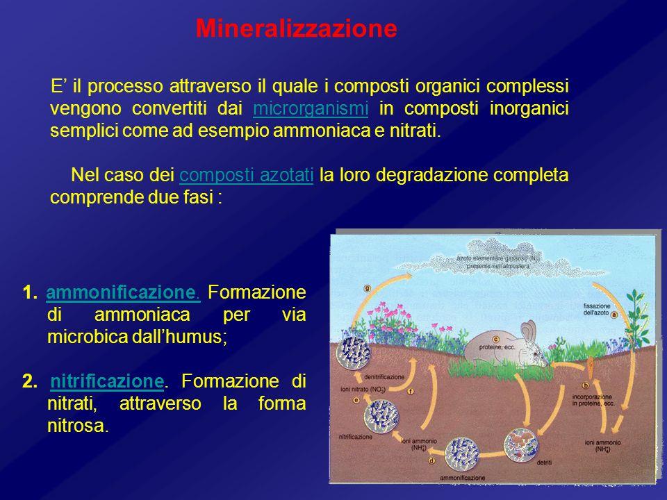Mineralizzazione E il processo attraverso il quale i composti organici complessi vengono convertiti dai microrganismi in composti inorganici semplici