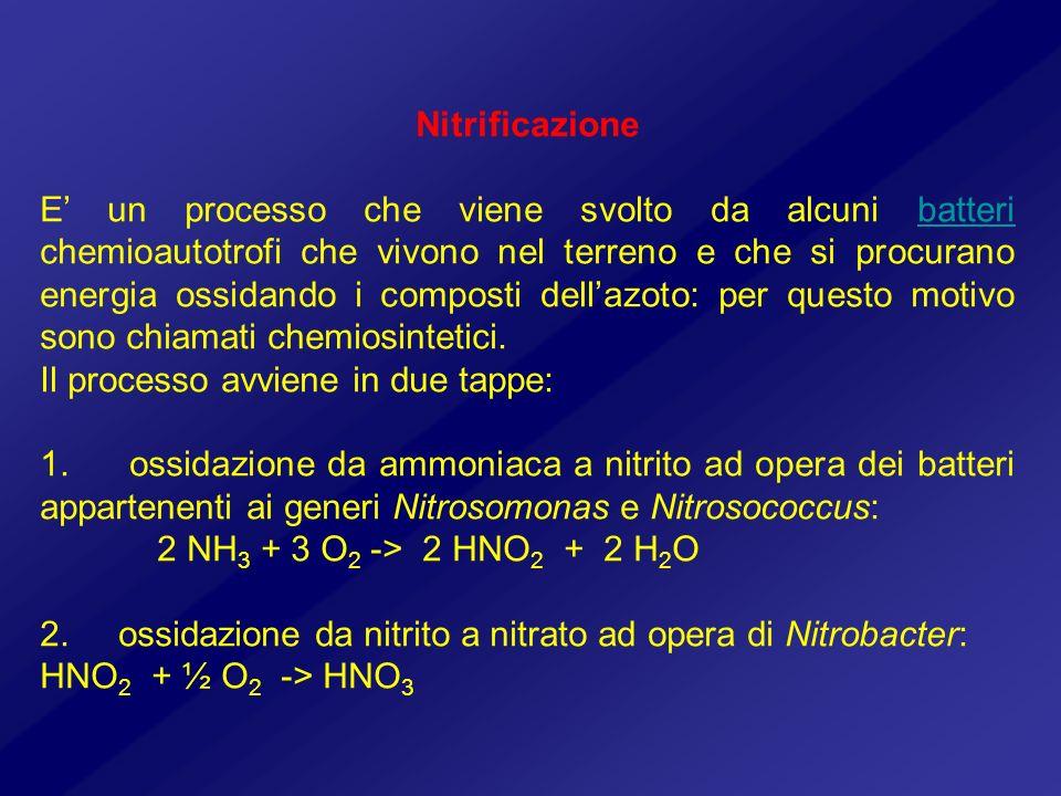 Nitrificazione E un processo che viene svolto da alcuni batteri chemioautotrofi che vivono nel terreno e che si procurano energia ossidando i composti
