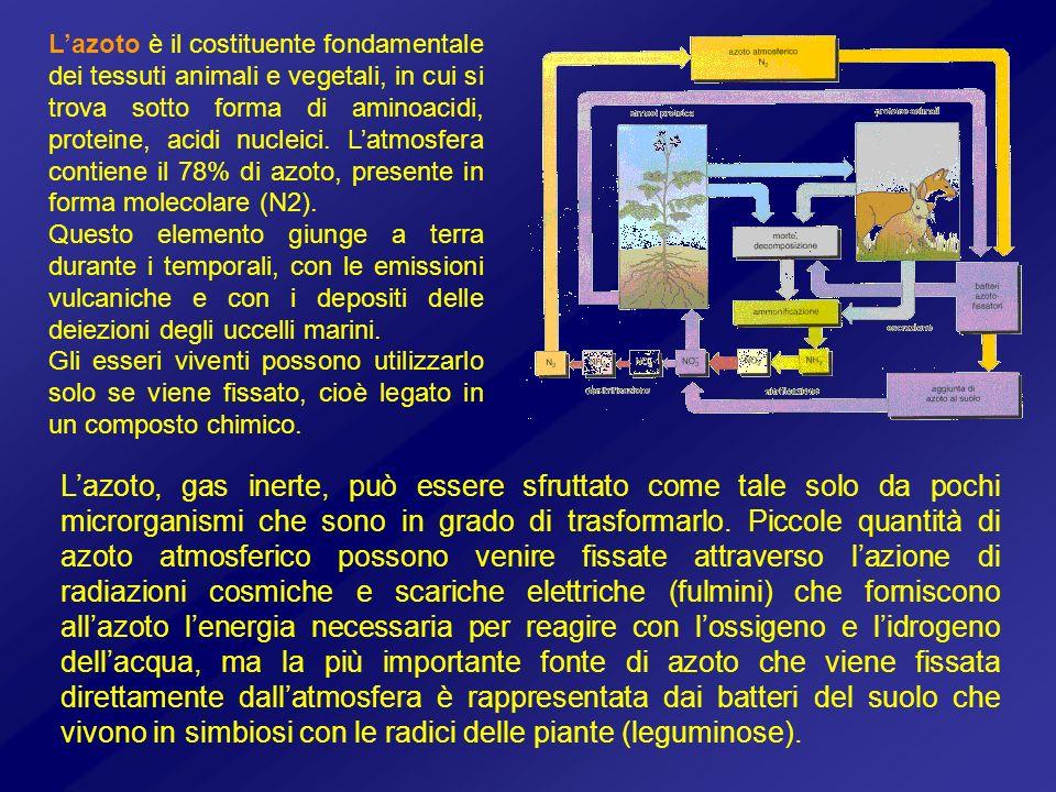 Lazoto, gas inerte, può essere sfruttato come tale solo da pochi microrganismi che sono in grado di trasformarlo. Piccole quantità di azoto atmosferic